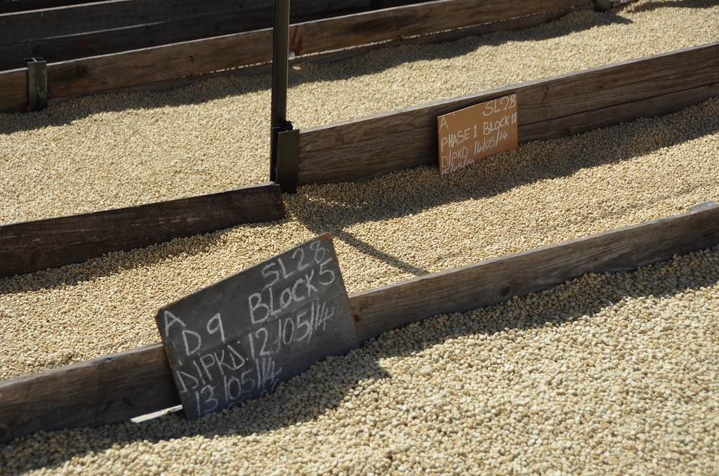 Munali koffie (3)