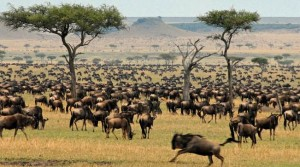 the graet migration